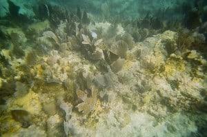 Schnorcheln bei Key Largo, Florida