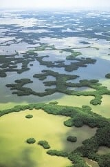 Tenthousand Islands in den Everglades, Florida